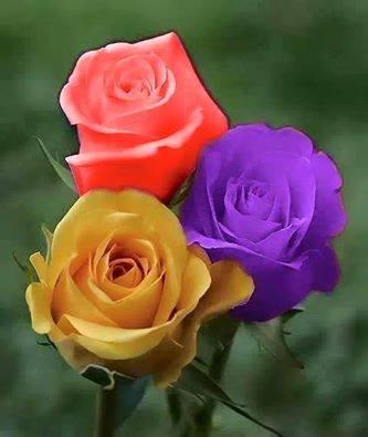 flores republica