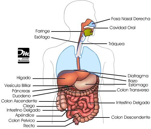 dieta postoperatorio gastrectomia total
