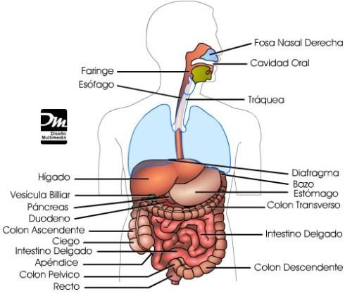 digestivo2