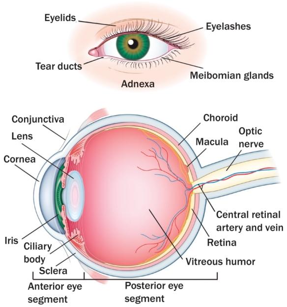 efectos oculares de la diabetes