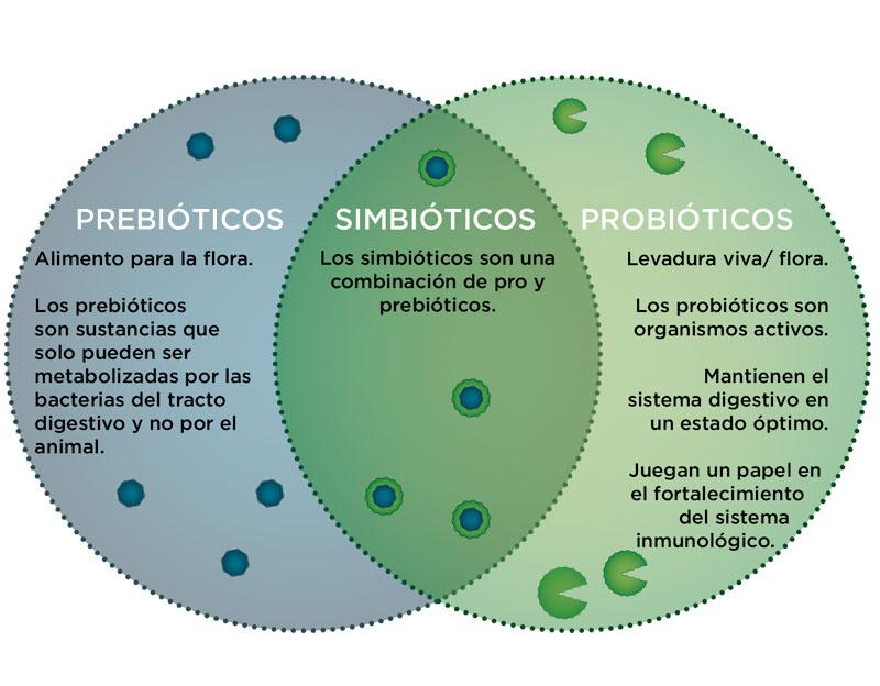 probioticos-para-caballos-3