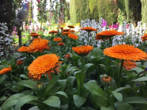 flowers-2341260_960_720
