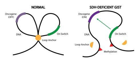 gist-epigenetics-DNA-loops-d4