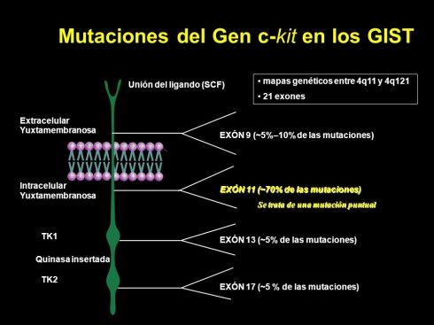 Mutaciones+del+Gen+c-kit+en+los+GIST
